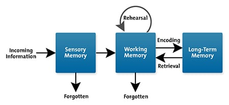 Image result for memory process diagram