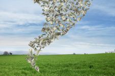 Cash flow forecasts are essential for effective financial management