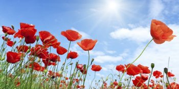 "Eldred's Power Strategies - Avoiding ""Tall Poppy Syndrome"""