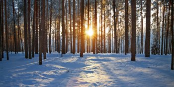 Working With Seasonal Affective Disorder or SAD - Managing Winter Symptoms