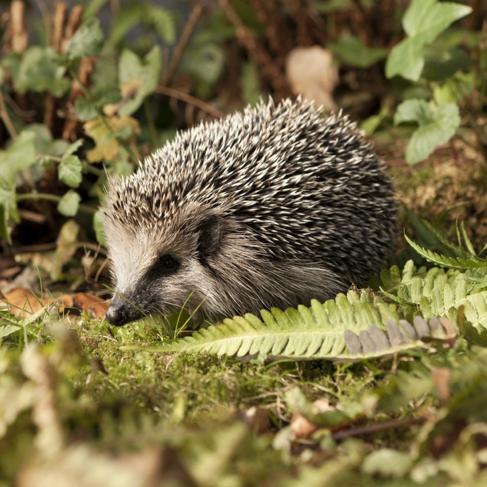 The hedgehog concept strategy skills training from mindtools fandeluxe Image collections